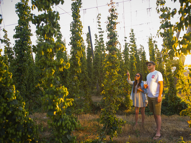 Yakima Valley Hops and Brews